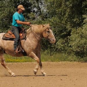 western-riding-587014_640